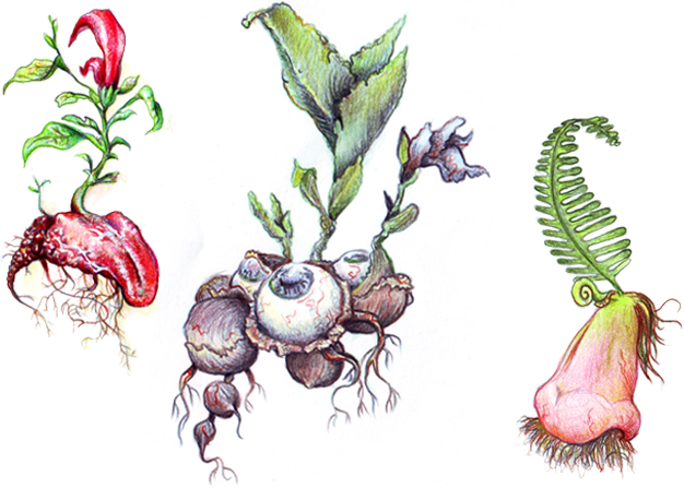 plantas_02